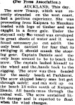Bay of Plenty Times 01 July 1907.